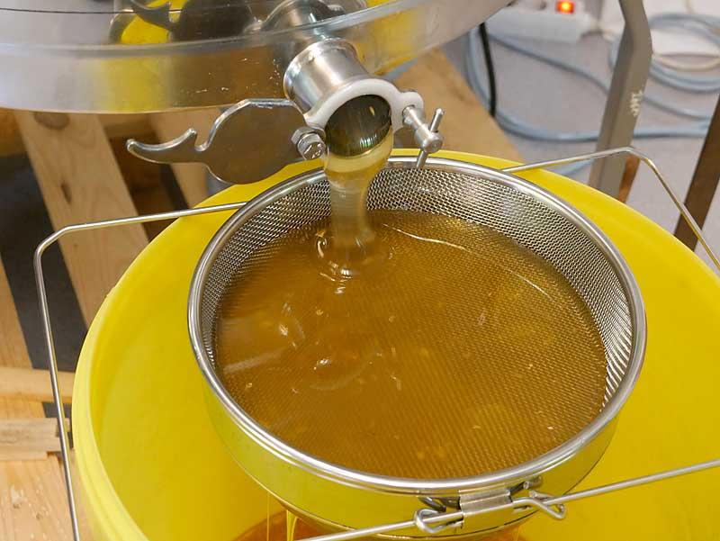 Honig in Großgebinden (Preis auf Anfrage)
