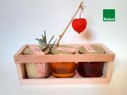Honiggeschenk: Frühlingsblüte, Linde, Waldhonig